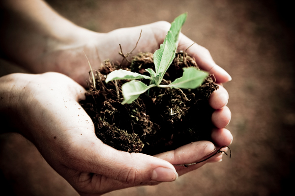 seedling-in-hands